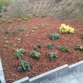 tuin laten aanplanten