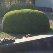 boom laten snoeien